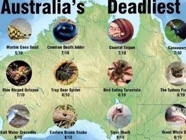 要不是為了移民,誰來澳洲留學啊?