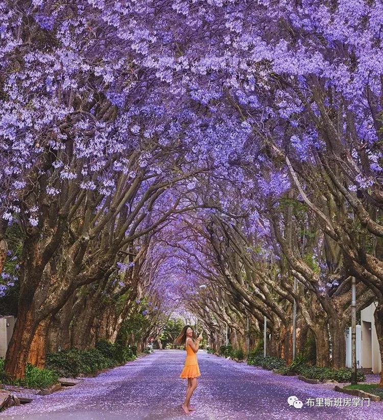 【布里斯班十月活动】电影、艺术、文化、啤酒 许你一场紫色的倾城热恋!