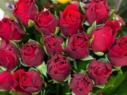 玫瑰产地-416x312.jpg