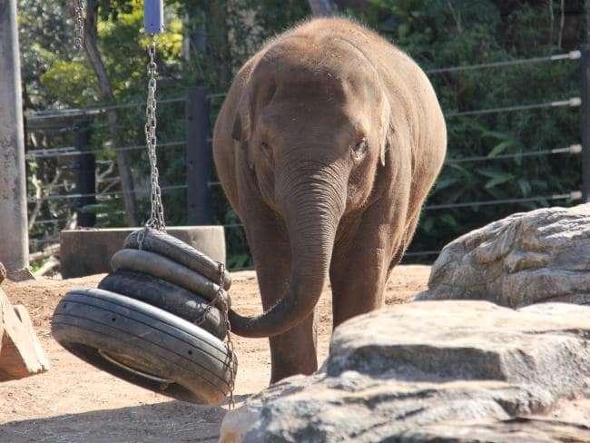 大象1.jpg