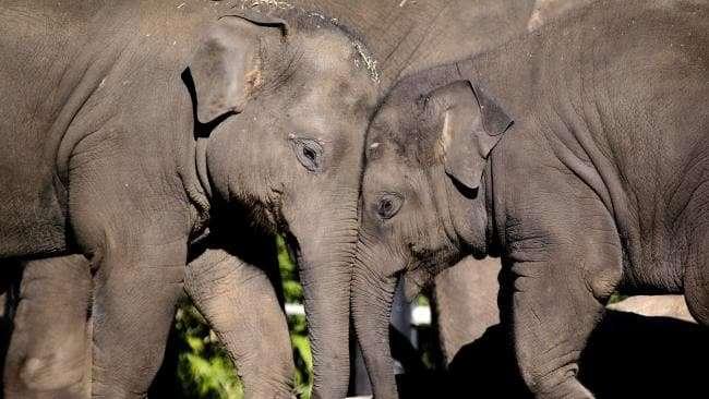 大象3.jpg