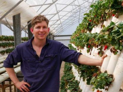 草莓藏针事件已一个月 果农生意走上正轨 但犯人还没抓到
