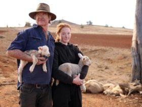悉尼人民集体向政府施压 就为了帮助这个要开枪打死羊群的农民
