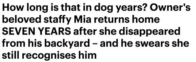 墨尔本男子寻爱犬7年未果 最终因一个看不见的小东西重聚