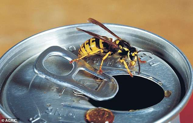 12277932-6922471-Australia_is_facing_an_epidemic_of_European_super_wasps_pictured-m-20_1555296339865.jpg?x-oss-process=image/format,png