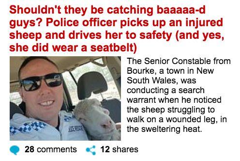 澳洲警察不去抓坏人 却开车抓羊?竟然还给羊绑安全带…